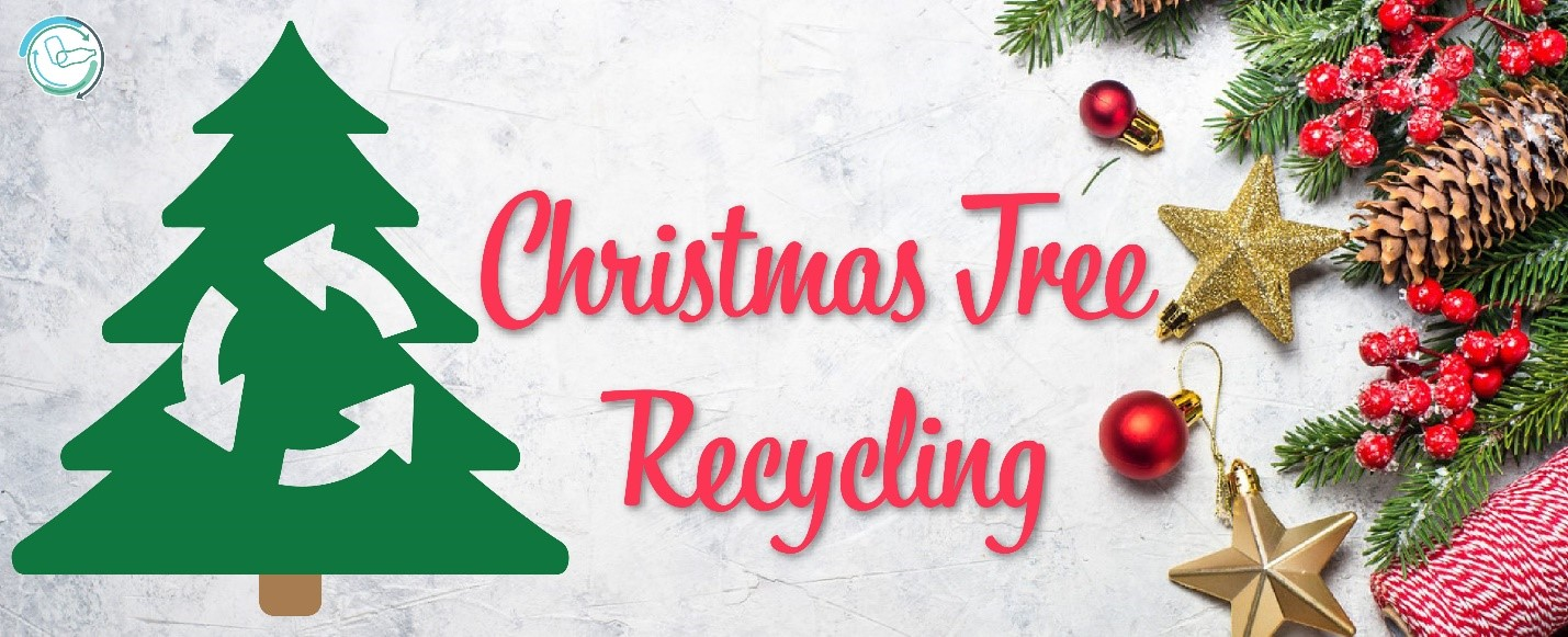 Christmas Tree Recycling and Reuse Ideas